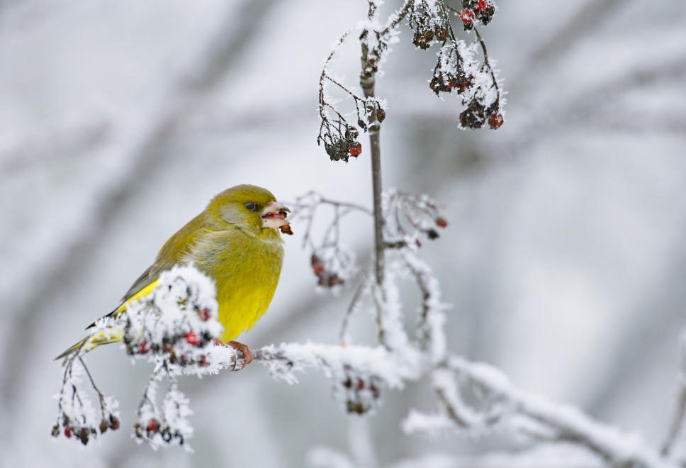 Vogelwarte Ch Richtig Vogel Futtern Im Winter