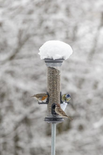 Vogelwarte Ch Vogel Futtern Im Winter