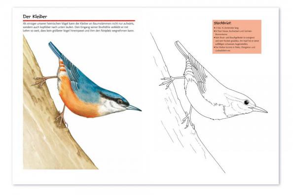 vogelwartech  'vögel'  malspass