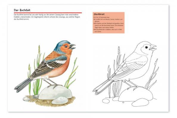 Vogelwartech Vögel Malspass