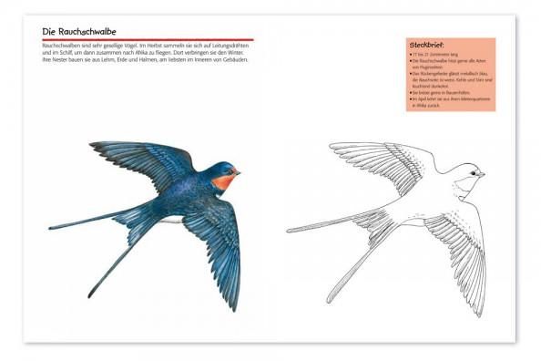3 Fresh Ausmalbilder Vögel Am Futterhaus