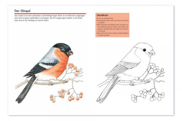 Vogelwarte Ch Vögel Malspass