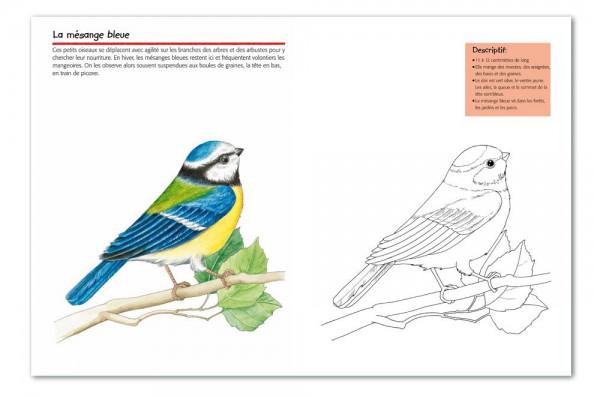 Vogelwarte Ch Oiseaux Cahier De Coloriage
