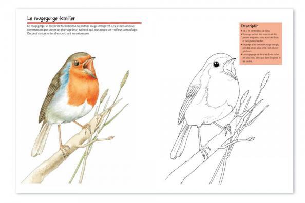 vogelwartech  'oiseaux'  cahier de coloriage