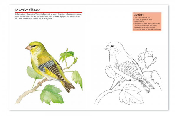 vogelwartech  « oiseaux »  cahier de coloriage