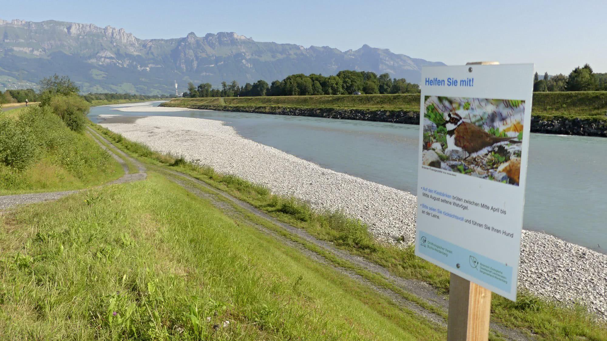 vogelwarte ch - Rails: secretive life between water and land